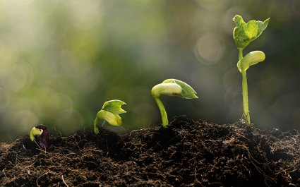 Sustainability - cover picture - sustainable - biodegradable